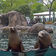central park zoo weddings 2